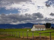A Pastoral Scene in Montana
